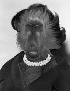 Ann_Landers baboon 2