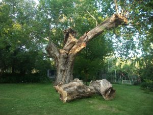 Box Elder and Sons