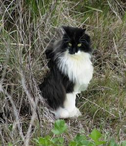Cat_in_weeds