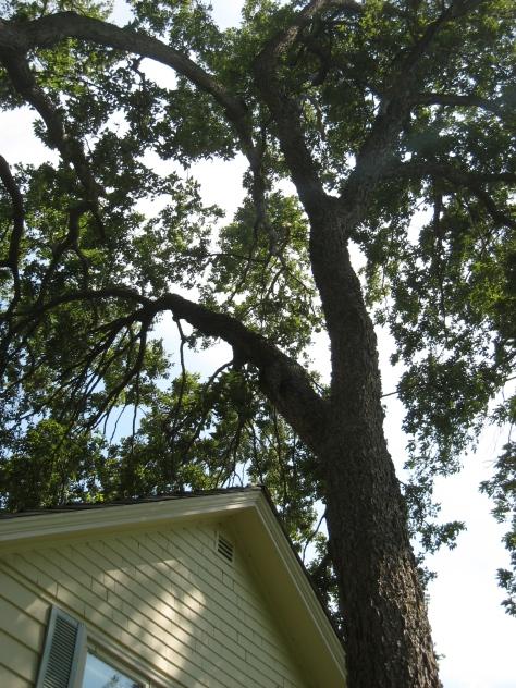 Fightin'tree