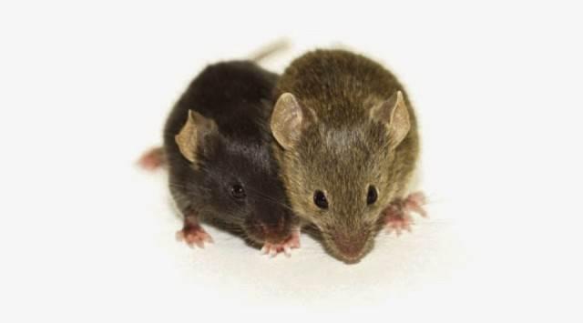 It's been mice talking to ya!
