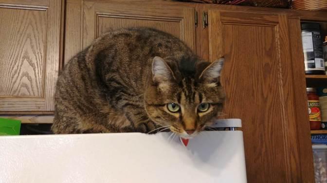 Teaching a Kitty New Tricks?