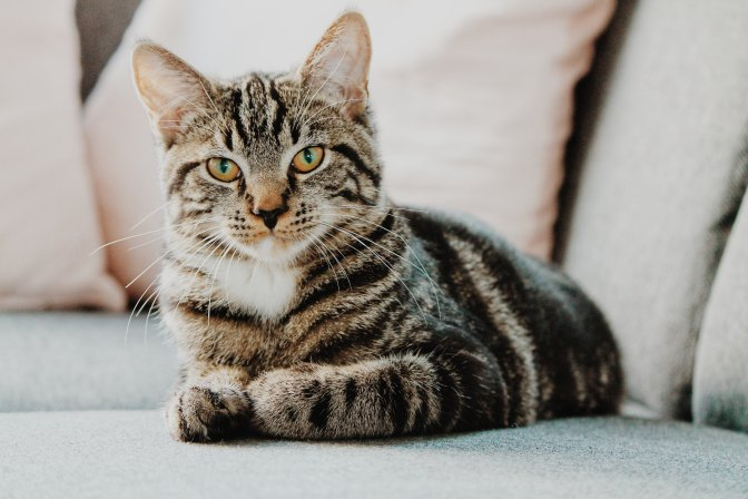 Here Kitty, Kitty!