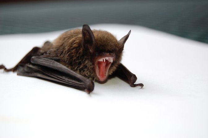 Are You Batty?