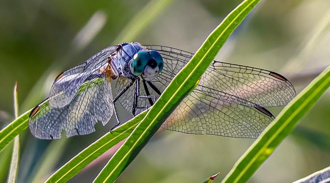 My Favorite Insects